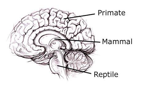 Ugłaszcz jaszczurkę, nakarm mysz i przutul małpę – jak uspokoić nasze 3 mózgi w czasie epdemii?